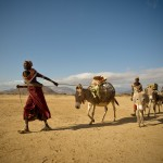 Women taking supplies across Kaisut Desert by mule. Gumato Lomurut, MR#45. Ntelengon Lamut, MR#46. Kehsimo Eisimkelle, MR#47.